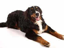 Eläinkuvausta Hund Spassa